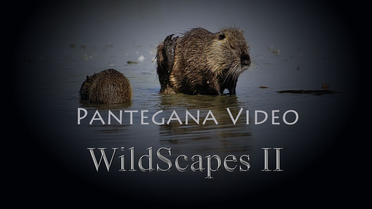 WildScapes II  – video –